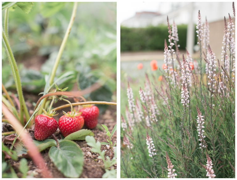 Aberdeen Scotland Family Blog Strawberry